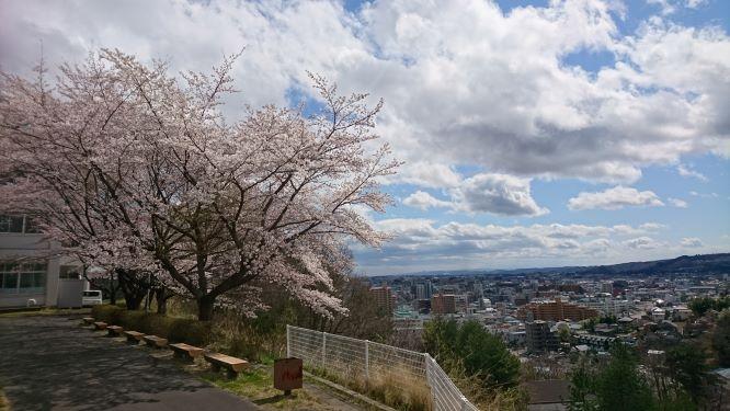 キャンパス内の桜.JPG
