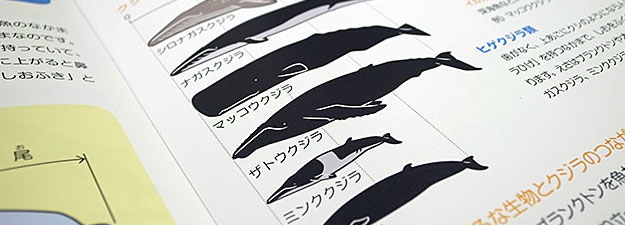 whale_book_sugata02.jpg